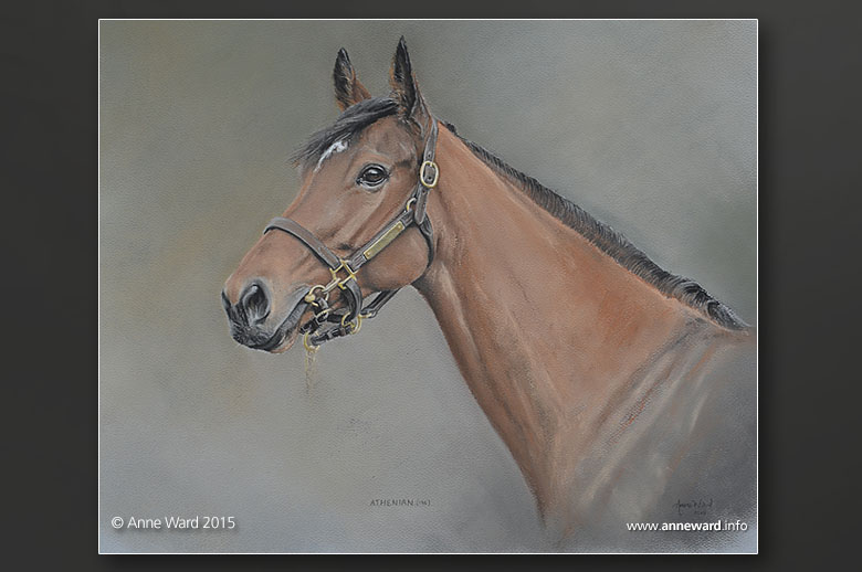 Ann Ward Facebook Anne Ward Racehorse Athenian