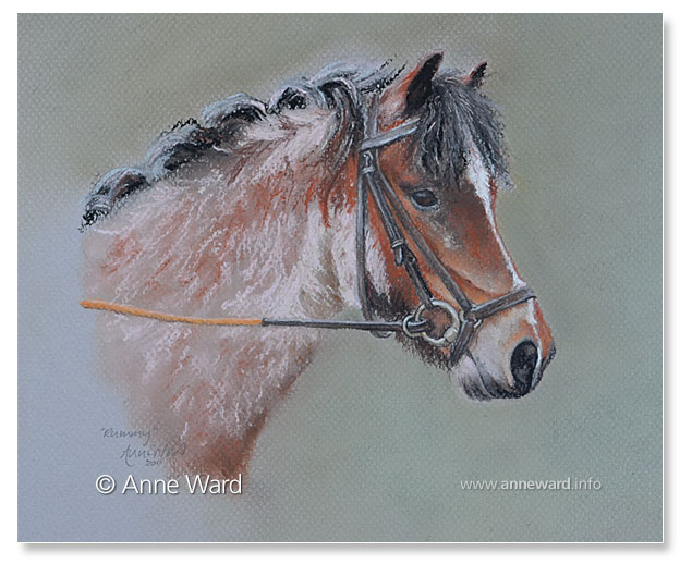 anne ward Welsh Mountain Pony portrait